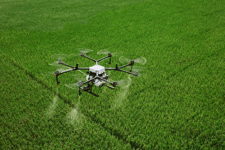 Drone sobre plantación agrícola.
